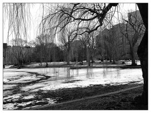 Winter Willow