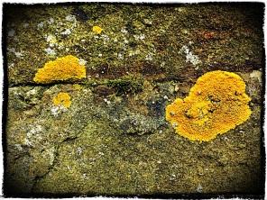 Map of Upper Lichen, Derbyshire.