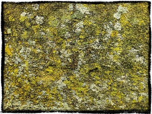 Dotted Lichen, Derbyshire.
