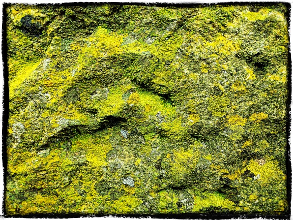 Mountains of Lichen, Derbyshire.