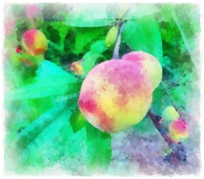 Image given the Aquarell treatment in Auto Paint, blended with high-res original using Image Blender and framed with Photo Toaster.