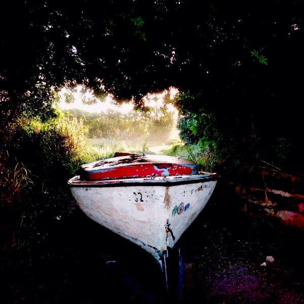 hedge-row