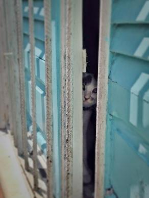 Cat, Salvador
